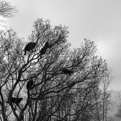 My Feral Family   Cat Tree No. 2